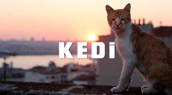KEDI (2017) – A REVIEW BY RYAN MARSHALL