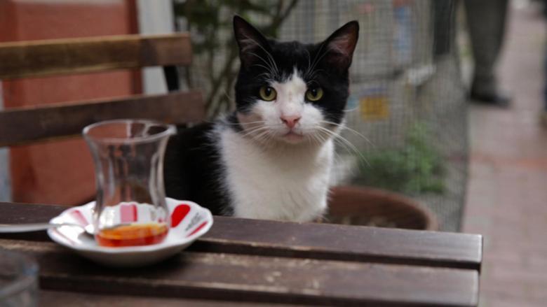 kedi2[1]