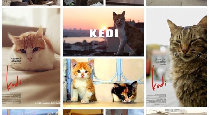 Ceyda Torun's Kedi